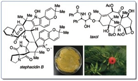 stephacidin-2